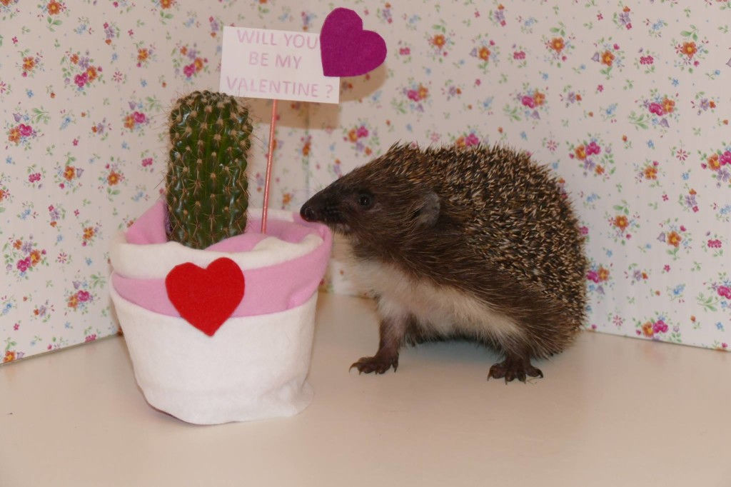 be my valentine !