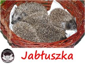 jabluszka