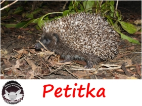 petitka
